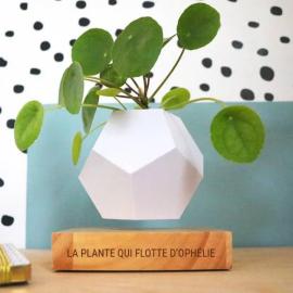 Plante en lévitation : Pot de fleurs flottant personnalisé