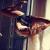 Cours de danse - Pole Dance à Paris